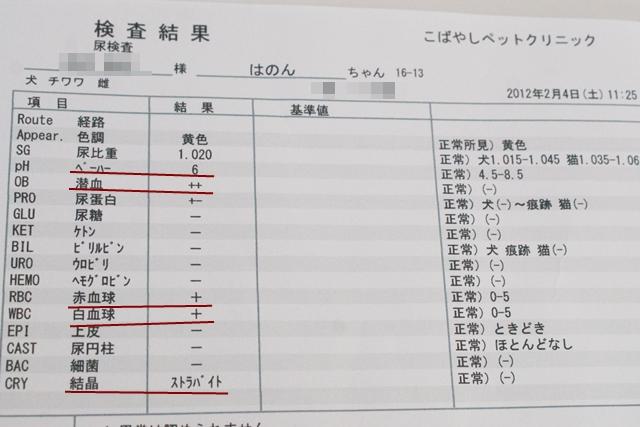 2012-2-4-6.JPG