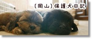 〔岡山〕保護犬日記
